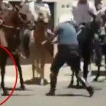 警察官を襲うピットブル、撃ち殺される。