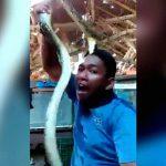 【アホ】ヘビで遊んでいた男、がっつり噛みつかれてしまう。
