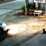 【閲覧注意】ベトナムでの犬泥棒の瞬間。毒矢を撃たれて叫び声をあげる犬。