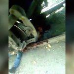 【閲覧注意】列車に轢かれて真っ二つになった男性、まだ生きてる・・・。