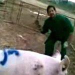 【閲覧注意】カメラに向かってふざけながら豚を屠殺する男たち。