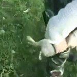 【閲覧注意】ハンター「仕留めたウサギの内臓はこうやって搾り取るよ!」