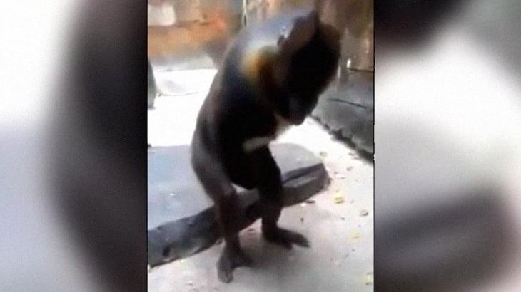 動物園のサルがオ●ニーする様子を大爆笑しながら撮影する来園者。