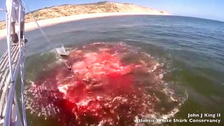 アザラシさん、ホホジロザメに食われて海面が血まみれに・・・。