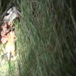 【閲覧注意】夜の森に飛行機が墜落。肉塊となった人間の死体が転がる現場が怖すぎる・・・。