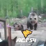 【衝撃映像】子熊に吠えまくる犬を撮影していたところに母親クマが現れて・・・。