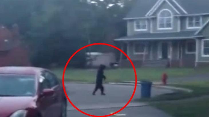 住宅街を2足歩行するクマ。これ中にオッサン入ってるだろ・・・。