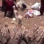 【閲覧注意】鳥葬のために死体を切り刻む人間。それに群がる大量のハゲワシ。