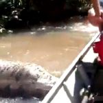 【衝撃映像】ボートで走行中に超巨大アナコンダに遭遇。