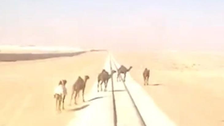 【衝撃映像】線路を横切ろうとしたラクダ、轢かれてしまう。