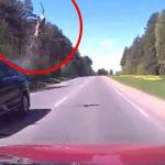 鹿さん、走行中の車に弾き飛ばされてしまう・・・。