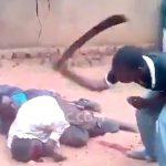 【衝撃映像】アフリカ、ヤバすぎる・・・。