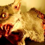 【閲覧注意】死んだ動物をグロテスクな姿に変えて剥製にするアーティスト。