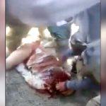 【閲覧注意】シーア派にナイフで首を刺されまくるスンニ派の兵士。