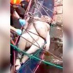 【閲覧注意】川から引き揚げられた女性の死体、身体パンパン・・・。