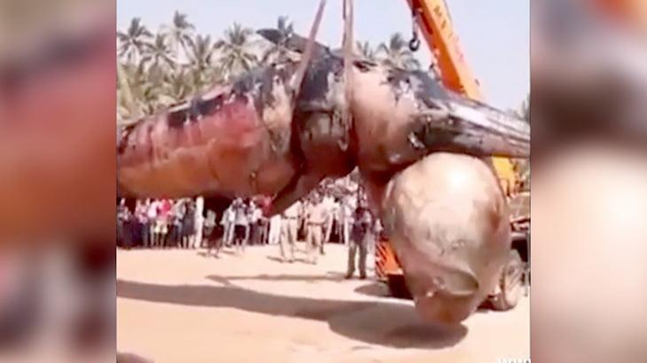 【衝撃映像】浜辺に打ち上げられたクジラの死体を回収する映像。