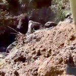 【衝撃映像】人をほぼ生き埋めにしてしまうロシアの兵士たち。