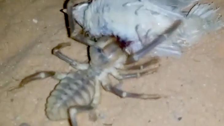 【捕食動画】小鳥を生きたままモシャモシャ食べる巨大なクモ。