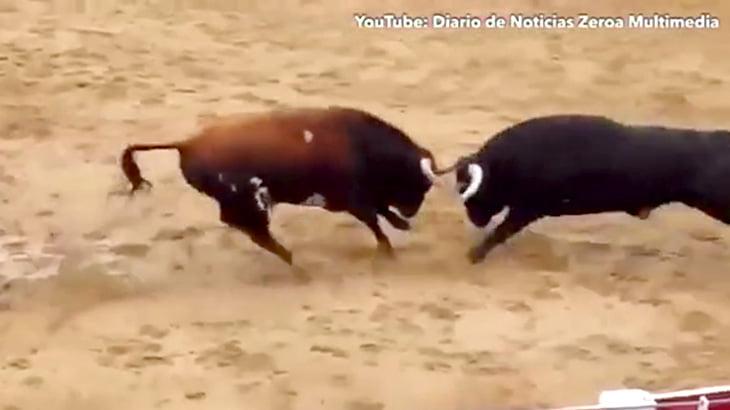 【衝撃映像】2頭の闘牛が頭突きでダブルノックアウトする瞬間。
