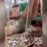漁師さん、漁網でオットセイを釣り上げてしまう。