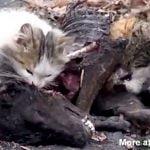 【捕食動画】犬の死体を食べる2匹のネコ。