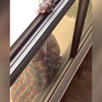 【衝撃映像】女性が窓から落ちそうになっているのに助けもせず動画を撮影する女。