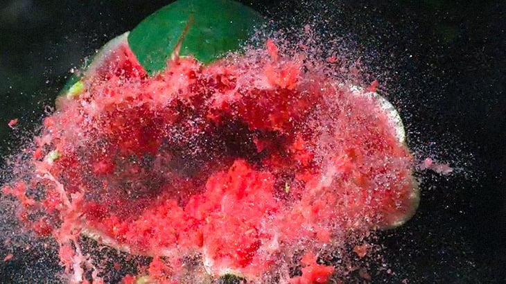 【閲覧注意】ショットガンで頭が破裂するグロ動画。