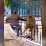ライオンの檻に近づきすぎた男、手をがっつり噛まれてしまう・・・。