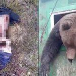 【閲覧注意】クマに食われてしまった人間のグロ動画。