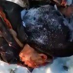 【閲覧注意】列車に轢かれて自殺した男性。飛び散った肉片が凍っているグロ動画。