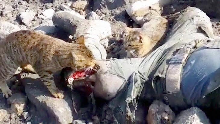 【閲覧注意】ウジが湧く人間の死体を食べる野良猫たちのグロ動画。