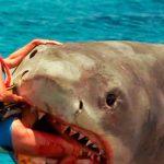 【閲覧注意】サメに襲われて身体をズタズタにされた男性のグロ動画。