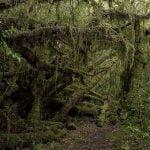 【閲覧注意】森の中で発見された死体。首を切断され胸が切り開かれたグロ動画。