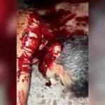 【閲覧注意】マチェーテで襲われた男、首がパックリ開いてしまったグロ動画。