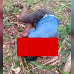 【閲覧注意】マチェーテで身体をズタズタにされて殺された男性のグロ動画。