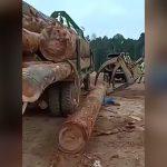 作業員の男性がトラックから落下した丸太に潰されてしまったアクシデント映像。
