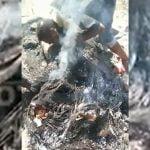 【閲覧注意】焼けた人間のチ●コを食べてしまう男のグロ動画。