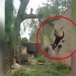 【衝撃映像】切断した木が振り子のように男性の顔に激突するアクシデント映像。