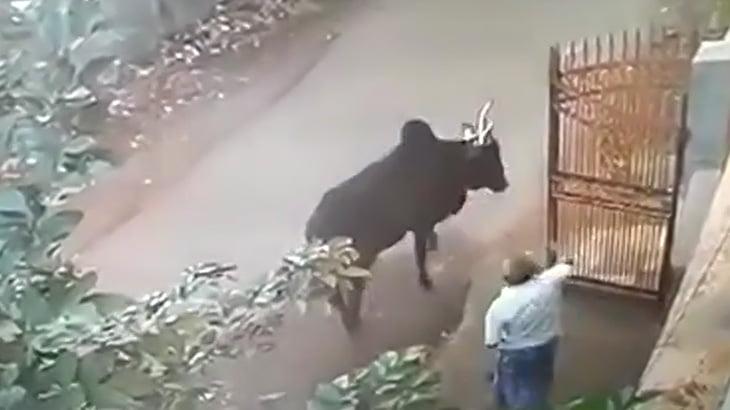 インドで道を歩く牛を興奮させてはいけない理由・・・。