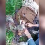 【閲覧注意】殺害した敵兵の首をナイフでゆっくり切断するグロ動画。