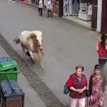 【衝撃映像】街なかを爆走する馬に轢かれてしまうお婆ちゃん。