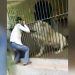 動物園の飼育員がライオンに左腕を噛まれて流血するアクシデント映像。