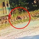 【閲覧注意】列車が近づく線路に横になって自殺する女性。