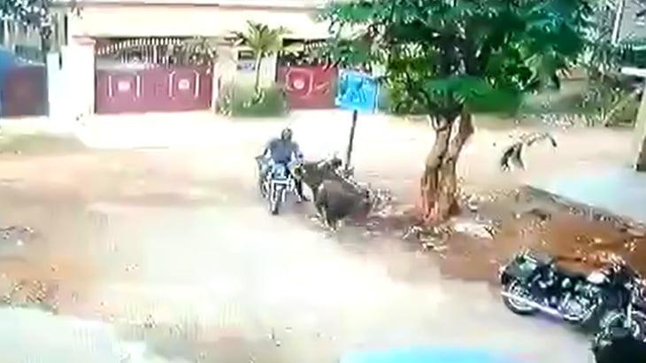 バイクに乗っていた男性、牛に瞬殺されてしまう映像。