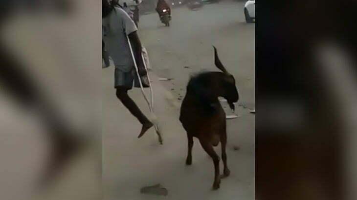 片脚の無い男 v.s ヤギ の映像。