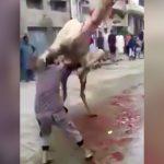 屠殺しようとしたラクダに足蹴りされてノックアウトしてしまう男の映像。