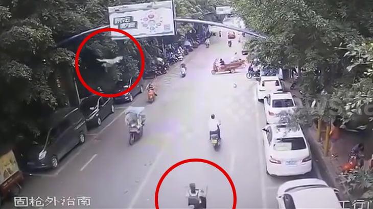 スクーターに乗っていた女性がガチョウにデスフロムアバブで転倒させられてしまう映像。