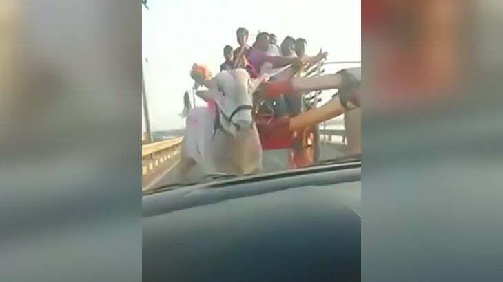 【衝撃映像】突進してきた牛にフロントガラスを破壊されてしまうアクシデント。