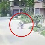 空から降ってきた窓枠にぶつかって死亡してしまった男性の映像。