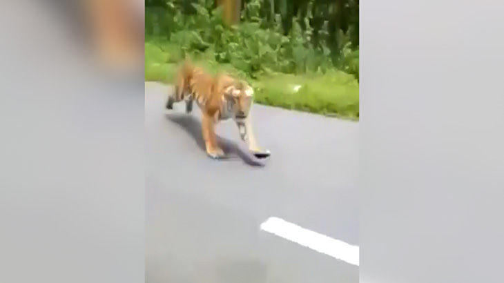 バイクに乗っていた男性が猛スピードで走ってきたトラに襲われそうになる映像、めっちゃ怖い・・・。